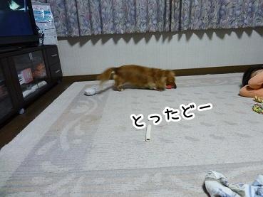 kinako910.jpg