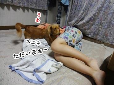 kinako911.jpg
