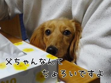 kinako93.jpg