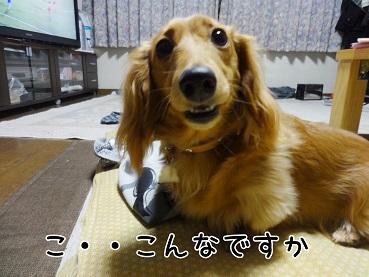 kinako94.jpg