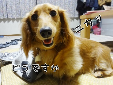 kinako95.jpg