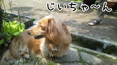 kinako96.jpg