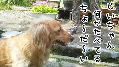 kinako97.jpg