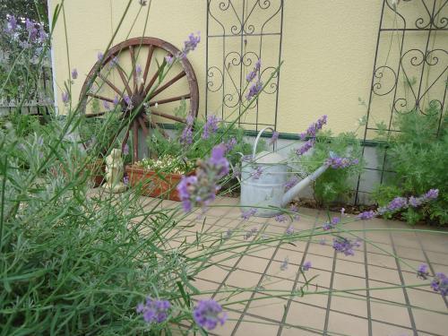 lavendar-ippai-saitemasuyo.jpg