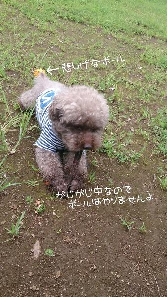 2014-07-17114557.jpg