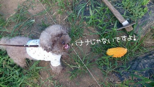 2014-08-05_22228.jpg