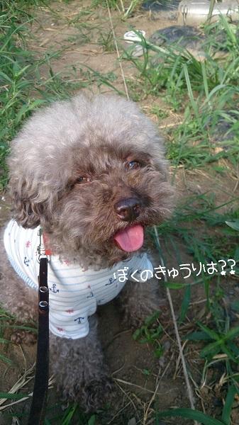 2014-08-05_222819.jpg
