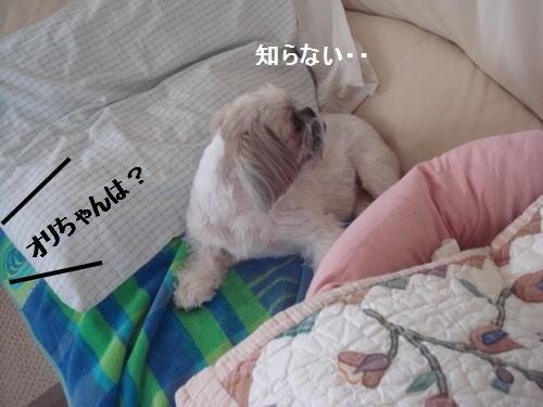 DSC05092moji.jpg