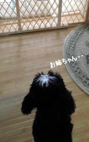 olly140825amoji.jpg