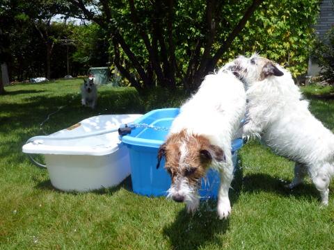 暑い日は水遊び(3)