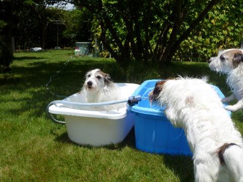 暑い日は水遊び(4)