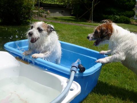 暑い日は水遊び(2)