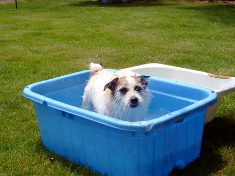 暑い日は水遊び(5)