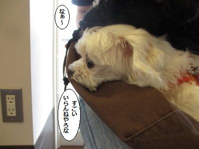 IMG_0084_1sogiikiki95545ddd0014.jpg