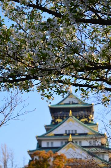 _大阪城桜DSC_5475