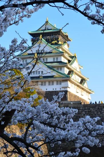 _大阪城桜DSC_5504