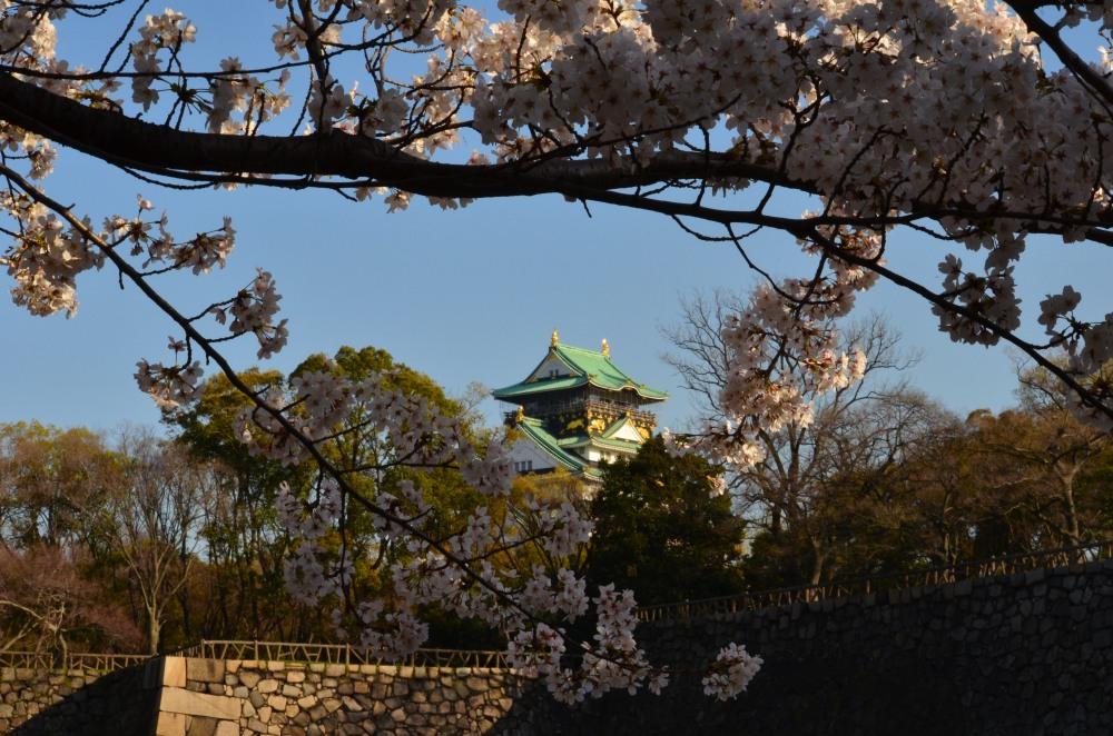_大阪城桜DSC_5404