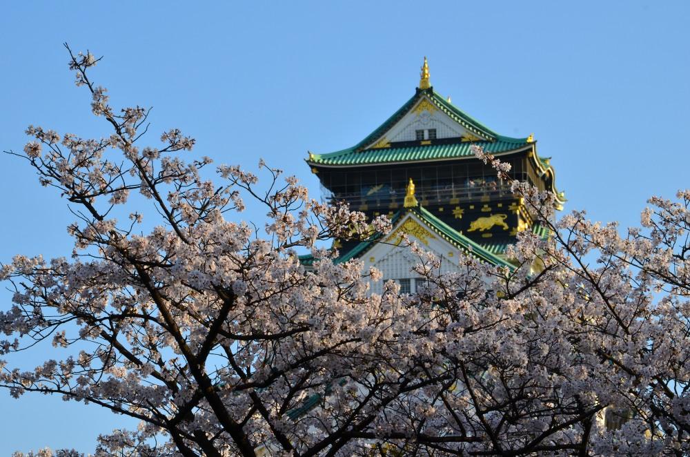 _大阪城桜DSC_5480