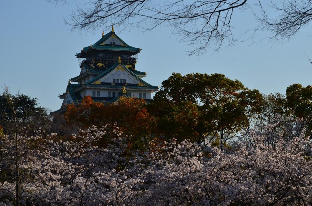 _大阪城桜DSC_5456