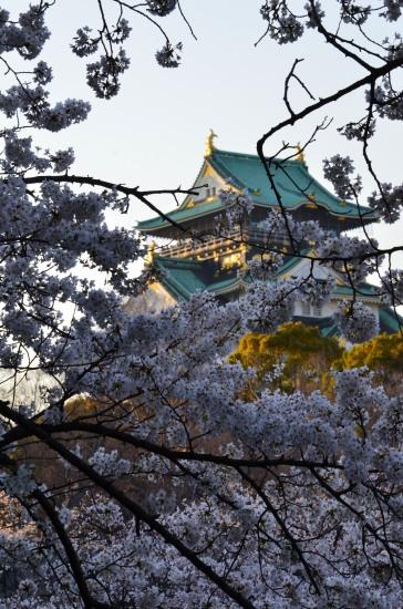 _大阪城桜DSC_5513