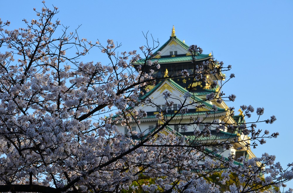_大阪城桜DSC_5485