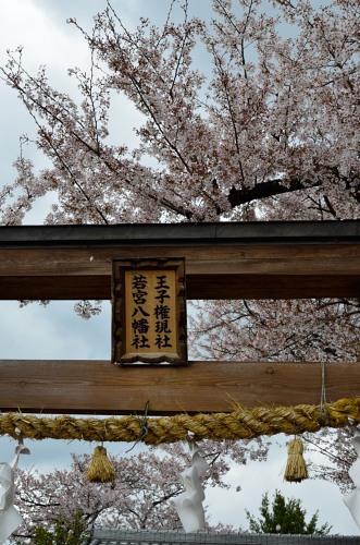 _桃の花DSC_5693