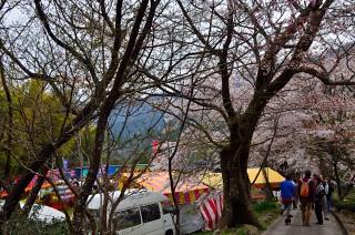 _三多気の桜DSC_6110
