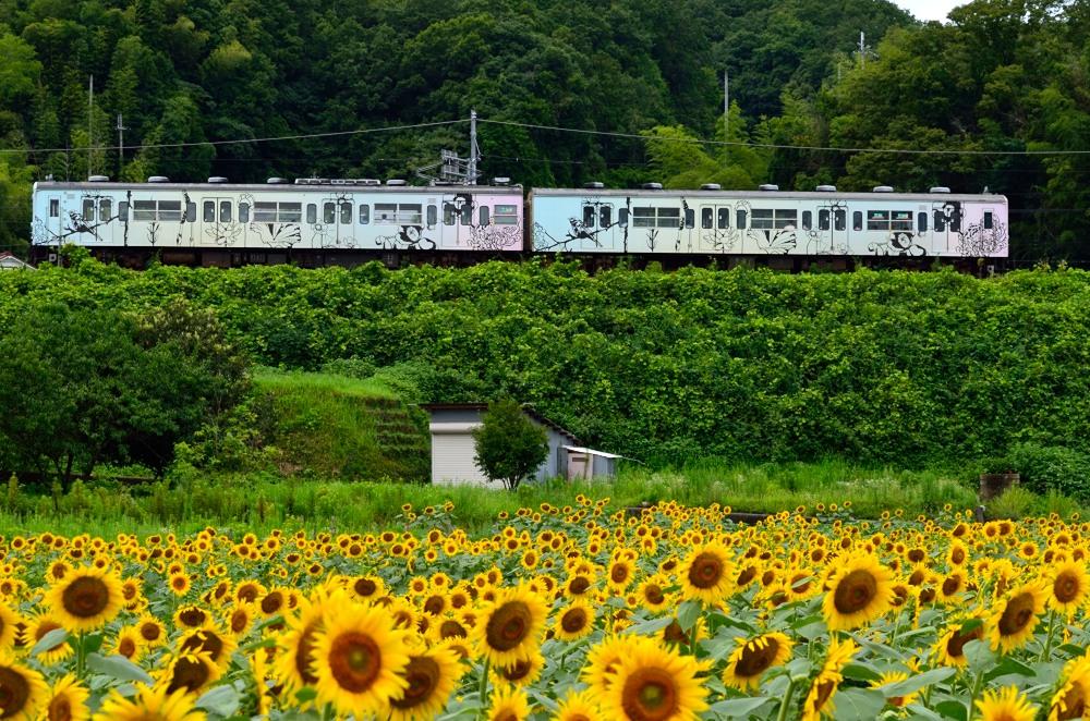 _ひまわりと列車7DSC_0672