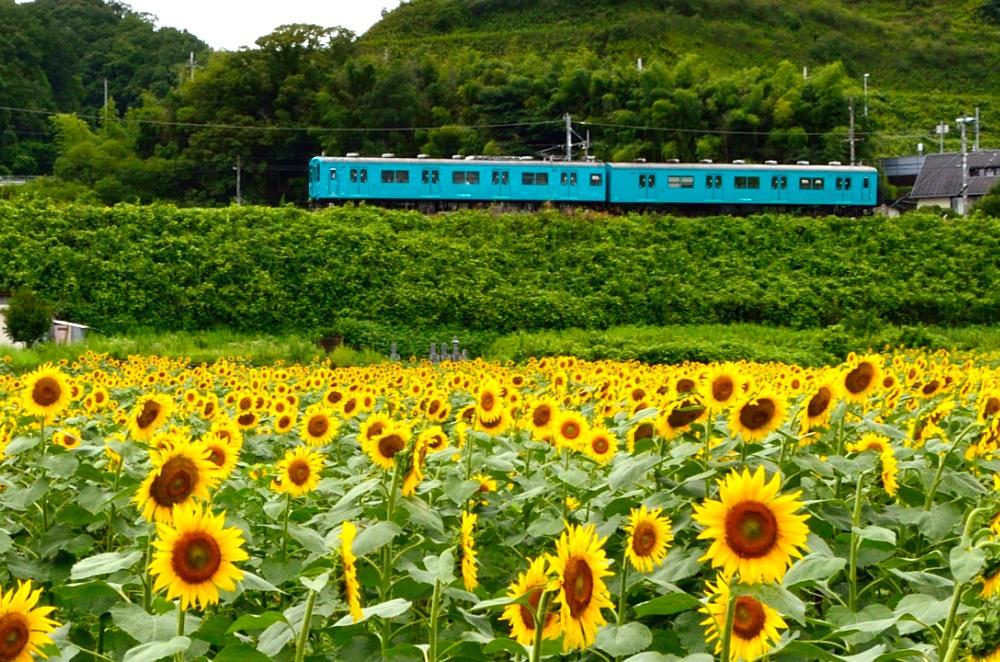 _列車5DSC_0610