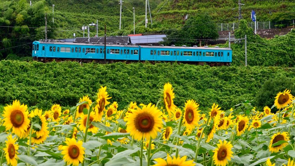 _列車3DSC_0509