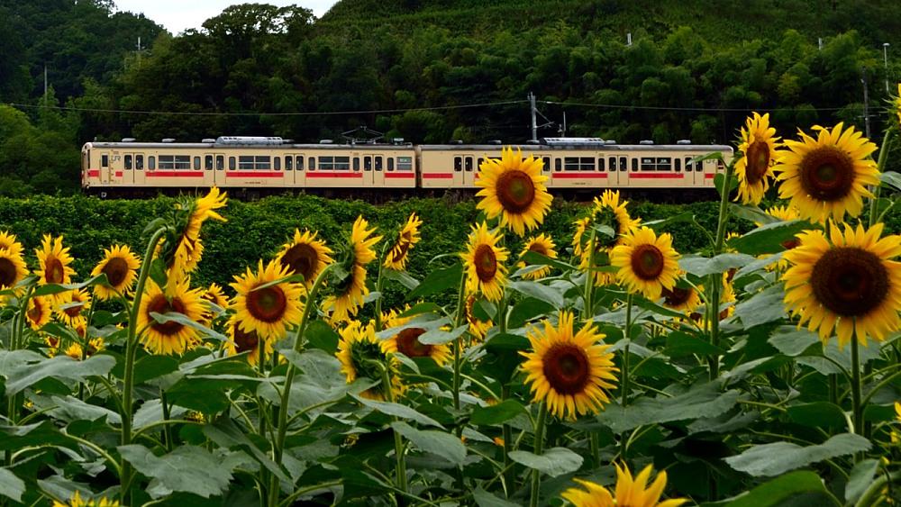 _列車4DSC_0584