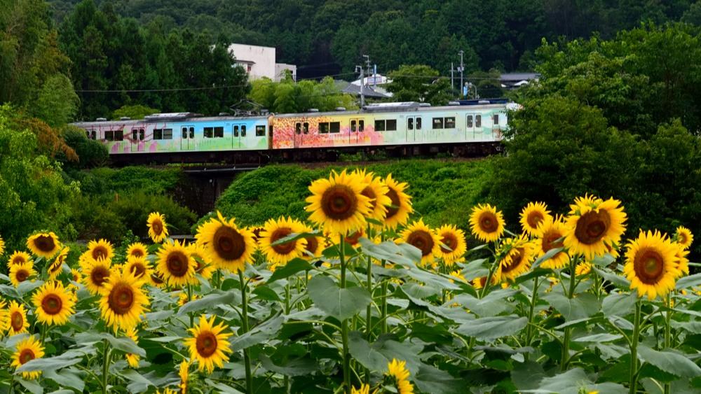 _列車2DSC_0468