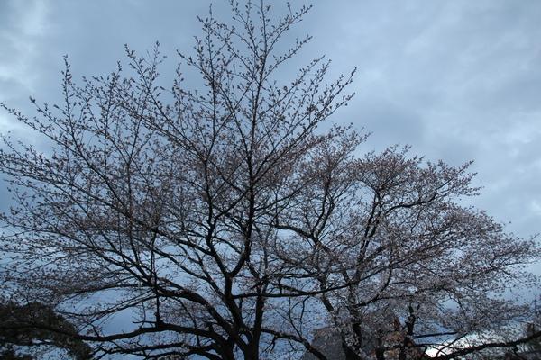 MG_3825_201403311514560bd.jpg