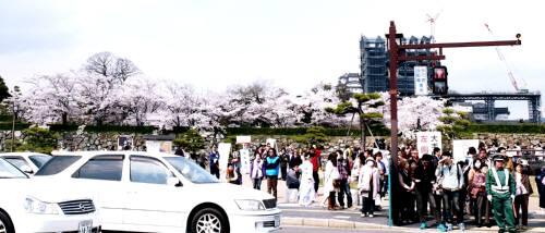 hanami46.jpg
