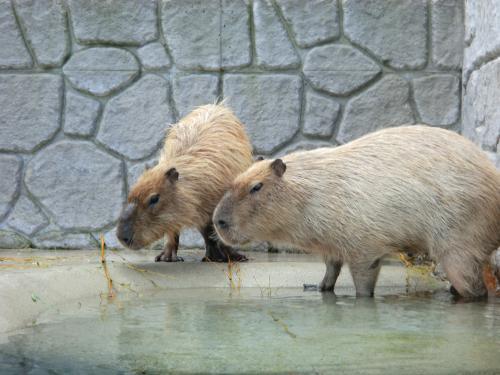 2014:那須動物王国・3
