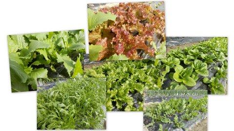 20140329サラダ菜類の畝-001
