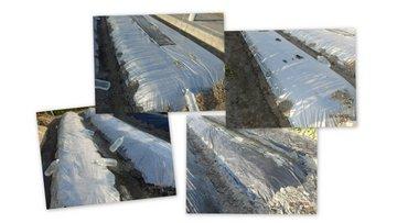 20140423夏野菜植え付け床