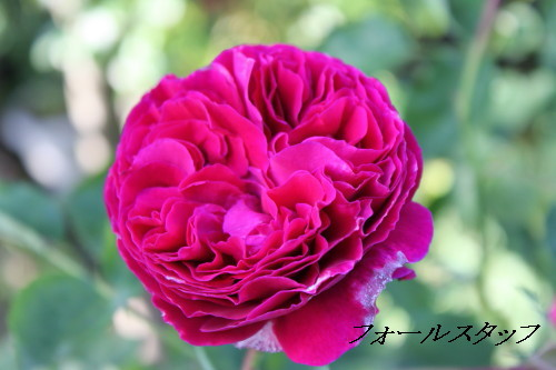 IMG_5293a.jpg