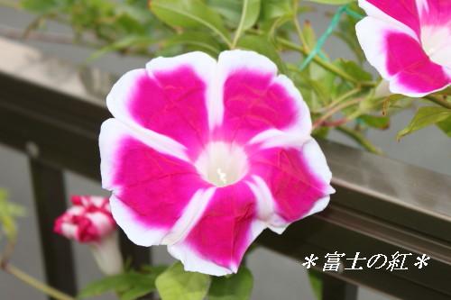 IMG_5557a.jpg