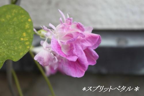 IMG_5564a.jpg