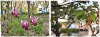 0413-春①