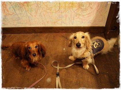 犬 文化祭♪ ①
