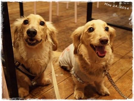 犬の文化祭☆1