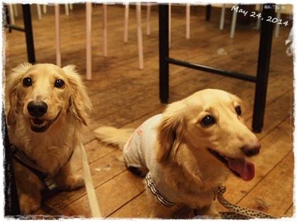 犬の文化祭☆2