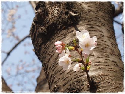 2014Sakura-7.jpg