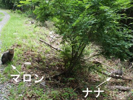 山椒摘み3