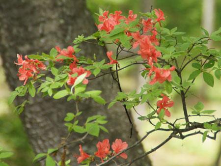 お花が次々1
