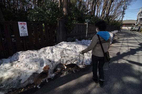 005街中雪