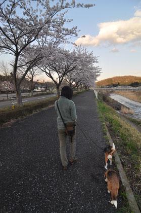 014夕方散歩