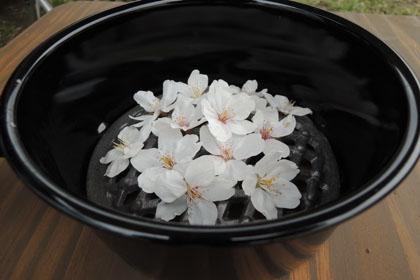 010桜の花びら